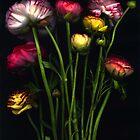 A handful of ranunculas by Barbara Wyeth