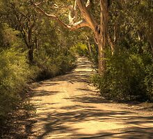 Boranup Forest, Nr Margaret River, Western Australia by Elaine Teague