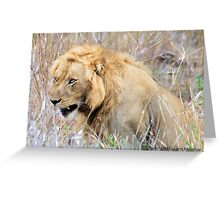 THE INCREDIBLE FORCE OF RESPECT - THE LION  - *Panthera leo* Greeting Card