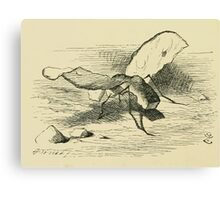Through the Looking Glass Lewis Carroll art John Tenniel 1872 0078 Bread and Butter Fly Canvas Print