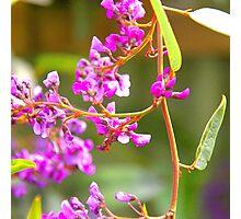 Happy Wanderer Creeping Flower Photographic Print