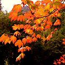 """""""Autumn Leaves"""" by Lynn Bawden"""