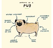 Anatomy of a Pug Photographic Print