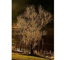 Willow Tree in Winter Photographic Print