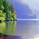 """""""Spring At Lake Crescent"""" by Lynn Bawden"""