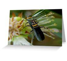 photoj Bug Time Greeting Card