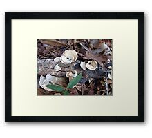 Pretty Little Things Framed Print