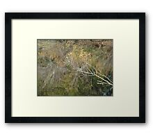Little Branch Framed Print