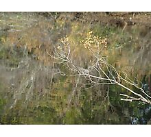 Little Branch Photographic Print