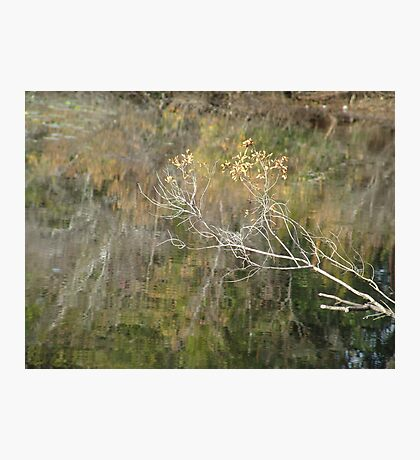 Little Branch Photographic Print
