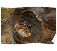 Florida Snapping Turtle Poster