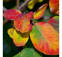 Rounded Coloured Leaves Photographic Print