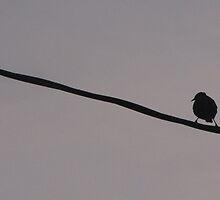 Bird On A Wire... by trueblvr