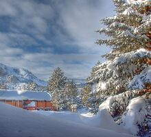 Snowflower View by socalmark
