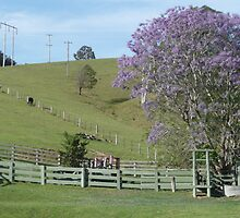 Rural Country near Bellbrook, N.S.W. Australia. by Mywildscapepics
