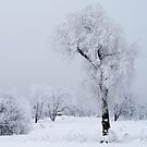 Frozen willow by Bluesrose