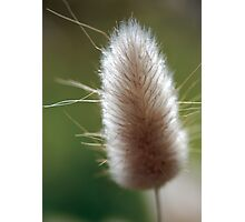 This is not a bunny tail Photographic Print