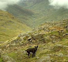 The Valley Below by VoluntaryRanger