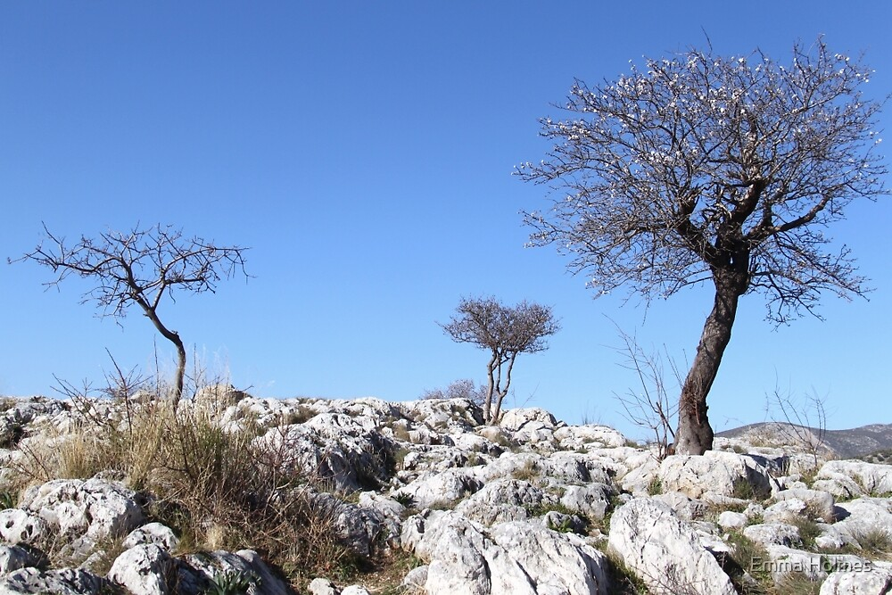 Rocky Trees by Emma Holmes