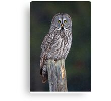Great Grey Owl on Post Canvas Print
