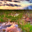 Everglades Twilight by Bill Wetmore