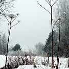 Scenery in winter by Antanas