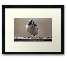 Is this for me...? (Sparrow / Mossie) Framed Print
