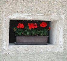 Window Box by Sandra Pearson