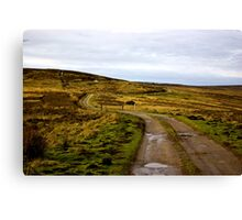 Moorland Track Canvas Print
