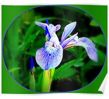 I is for Iris Poster