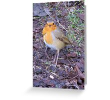 Ragged Robin Greeting Card