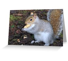 S is for nut too Greeting Card