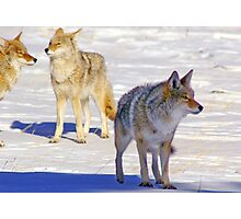 The Pack Alpha Photographic Print
