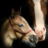 Mandi's Mare and Foal by isabelleann