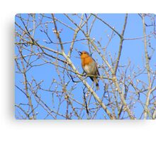 Sing from the highest tree Metal Print