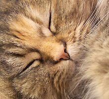 Please, Awake Me When Lunch Is Ready... by jean-louis bouzou