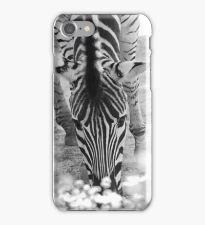 Zebra Munching iPhone Case/Skin