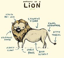 Anatomy of a Lion by Sophie Corrigan