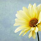 Yellow Bloom by Sheryl Kasper