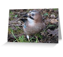 Are you photographing me again??????? Greeting Card