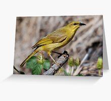 ''Yellow Honeyeater'' Greeting Card