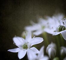 Chive by Looking-Glass