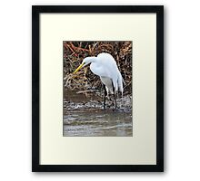 Eye of the Great Egret Framed Print