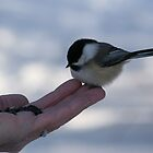 Over Here...Miss Chickadee by Larry Trupp