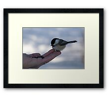 Over Here...Miss Chickadee Framed Print