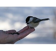Over Here...Miss Chickadee Photographic Print