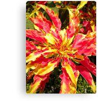 Flame Burst Canvas Print