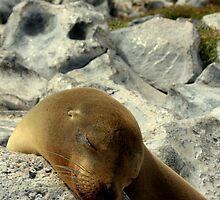 Snoozing Seal (Galapagos Islands) by BGpix