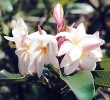 WHITE ORCHIDS by BonaParte