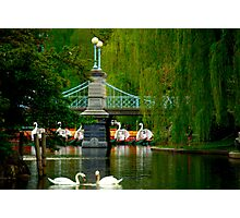 The Swans and Swan Boats Photographic Print